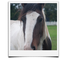 paardencoaching systemisch werk